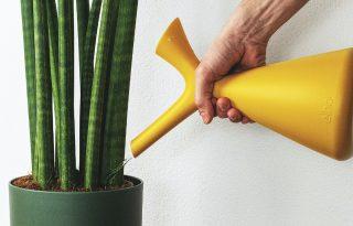 A túlöntözés nem csak a növényeknek árt