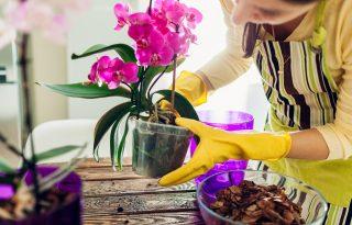 Nálad is folyton kihalnak az orchideák? Mostantól nem fognak!