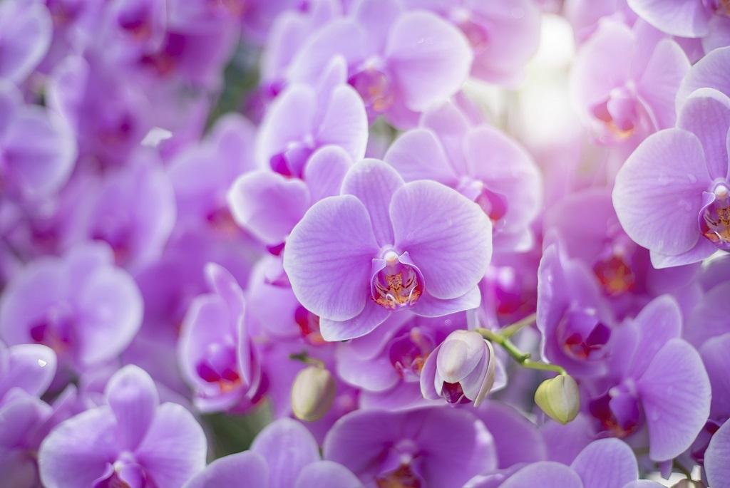 Ez a virág illik a csillagjegyedhez