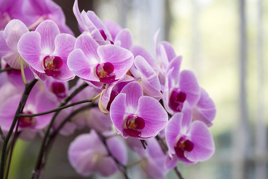 Orchidea-tippek kezdőknek