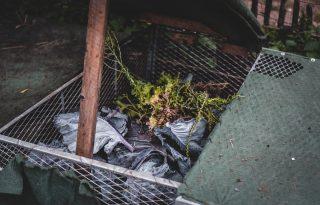 Komposztálas kezdőknek – ezeket teheted a komposztálóba!