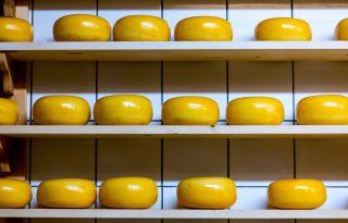 Sajtok és diéta: ezekben a fajtákban van a legkevesebb zsír!