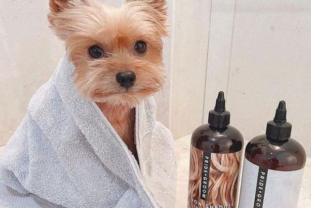 Luxus kutyasamponokra álltak rá a szépségmárkák?