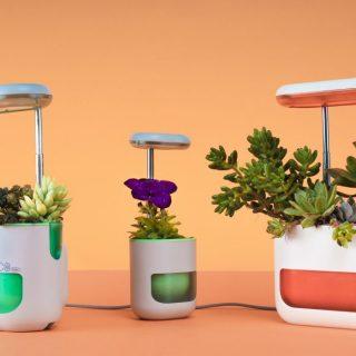 Ezzel a hasznos kütyüvel minden növény életben marad