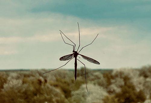 Öko módon is elűzhetjük a környezetünkből a szúnyogokat!