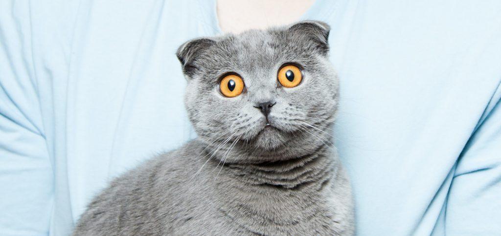 macska-kedv-mesterseges-intelligencia