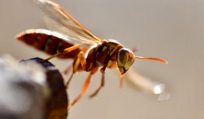 6 tuti módszer, hogy többé ne viszkessen borzalmasan a rovarcsípés