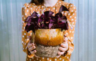 Növénymama: jó szerencse, bőség, szerelem – ezeket a növényeket tartsd otthon a hiedelmek szerint