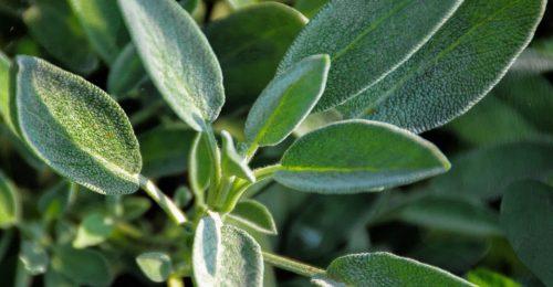 Gyógynövények, amik megállítják a hajhullást és karban tartják az agyat