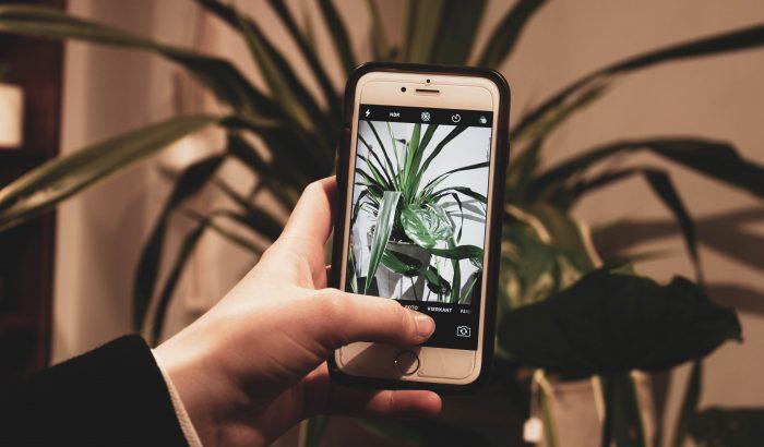 Növénymama: appok, amik életben tarthatják a növényeinket