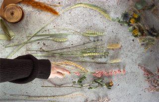 Növénymama: szárítsunk virágot, hogy átmentsük az őszbe a nyár színeit!