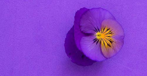 4 tény a liláról, az Isten ajándékáról